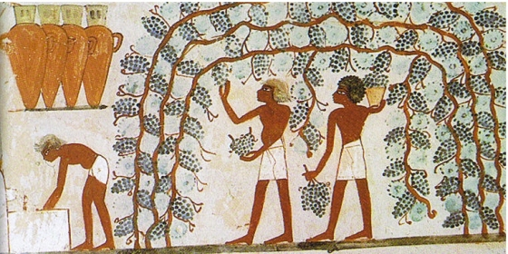 Tomb_of_Nakht_(12).vines - Version 2