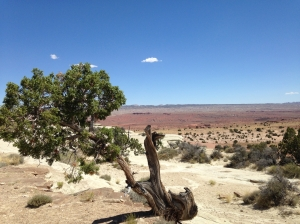 Tree in the Great Basin